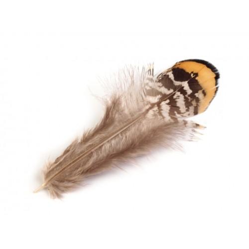 Ozdobné bažantie perie dĺžka 4,5-8,5 cm