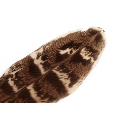Ozdobné bažantie perie dĺžka 10-18 cm